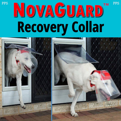 NovaGuard Recovery Collar for Dogs and Cats