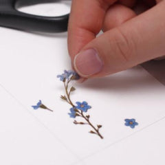 Press Flower Stickers Forget Me Not