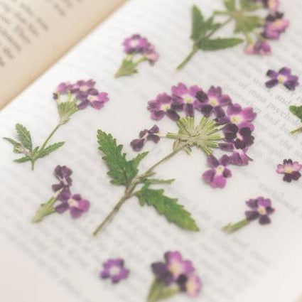 Press Flower Stickers Verbena