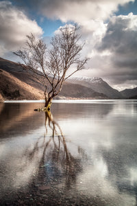 The Lonely Tree, Llanberis - Snowdonia. A bare tree stands alone in the elevated waters of Llyn Padarn in Llanberis. Blue sky and clouds reflected in the still water below. North Wales