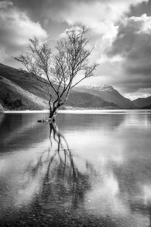 The Lonely Tree B&W