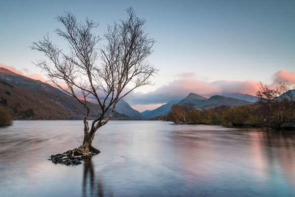 Sunset at Llyn Padarn, Llanberis - North Wales. A lone tree stands in the water of Llyn Padarn whilst the muted pinks and blues of sunset reflect on the surface. Smart Imaging & Framing Landscape Photography