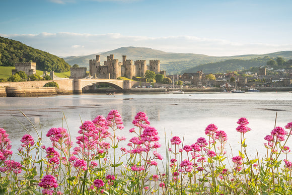 Conwy Castle - A Splash of Colour