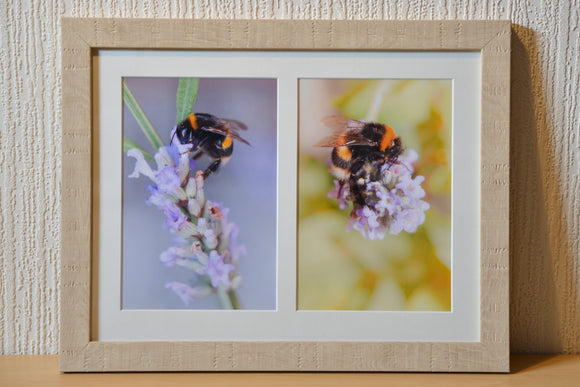 Smart Imaging & Framing - Two bumble bee on flower images, mounted and framed in light wood effect moulding. Macro, wildlife photography. Pastel Colours