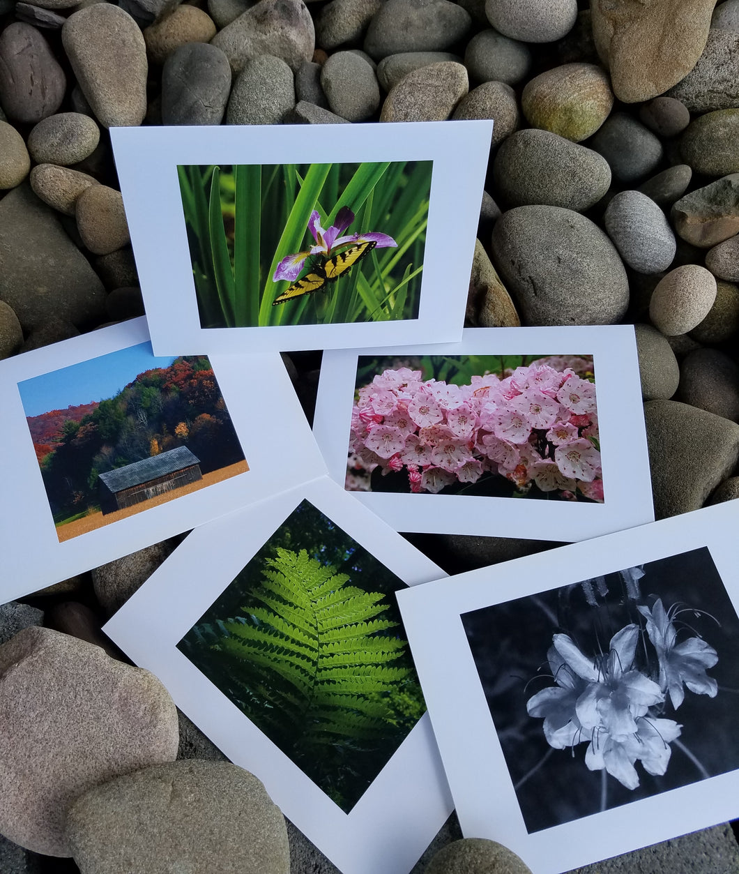 Forest Press Photography Note Cards 5x7