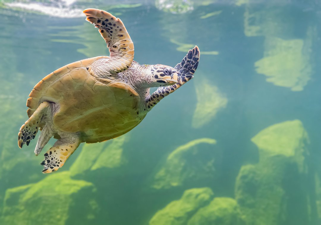 Can A Sea Turtle Survive In A Lake?