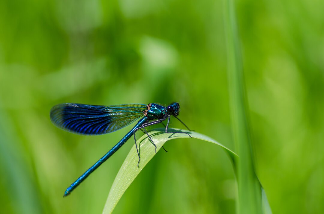What is the meaning of a dragonfly landing on you?