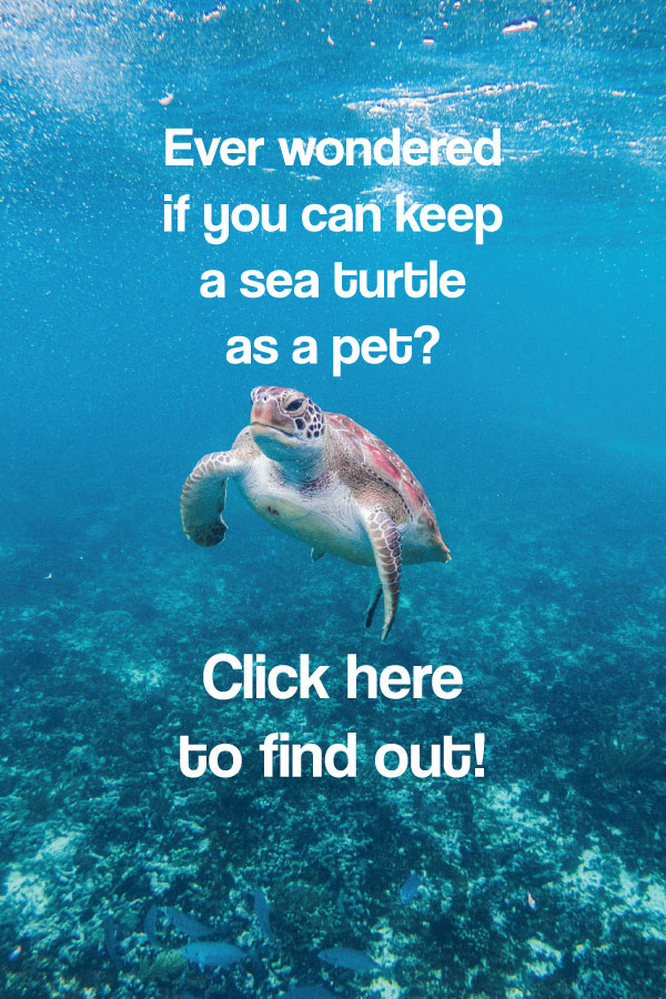 Can you keep Sea Turtles as Pets