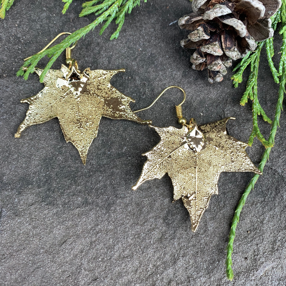 Two small gold coated maple leaves sit on a stone background. Each maple leaf has a gold earring hook attached to the stem end of the leaf. The gold has a bright finish. At the top of the picture are decorative evergreen leaves and a pine cone.