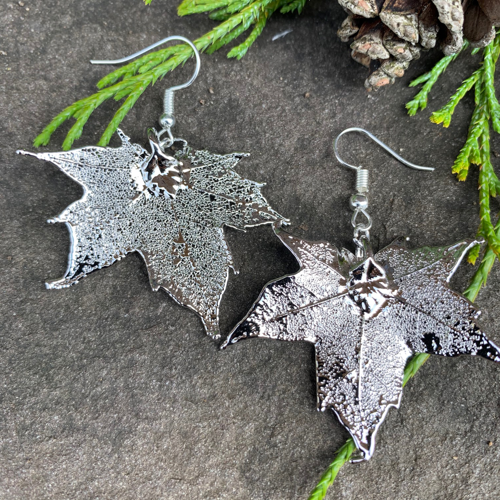 Two small silver coated maple leaves sit on a stone background. Each maple leaf has a silver earring hook attached to the stem end of the leaf. The silver has a bright finish. At the top of the picture are decorative evergreen leaves and a pine cone.