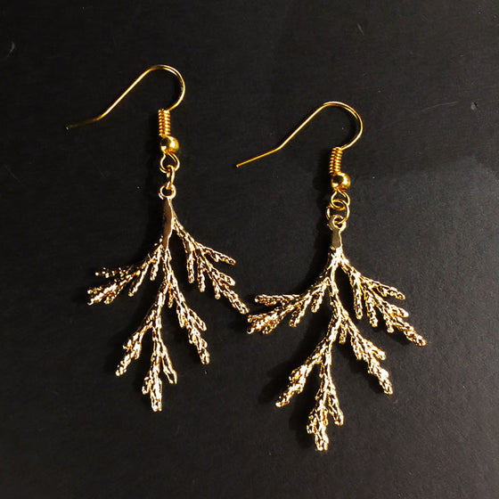 Two gold coated pieces of juniper sit on a black background. A gold earring hook is attached at the stem end of each juniper piece.