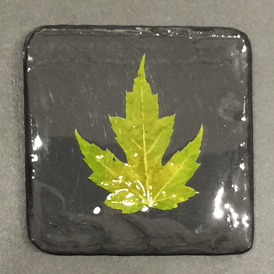 A square black piece of slate featuring a single green maple leaf.