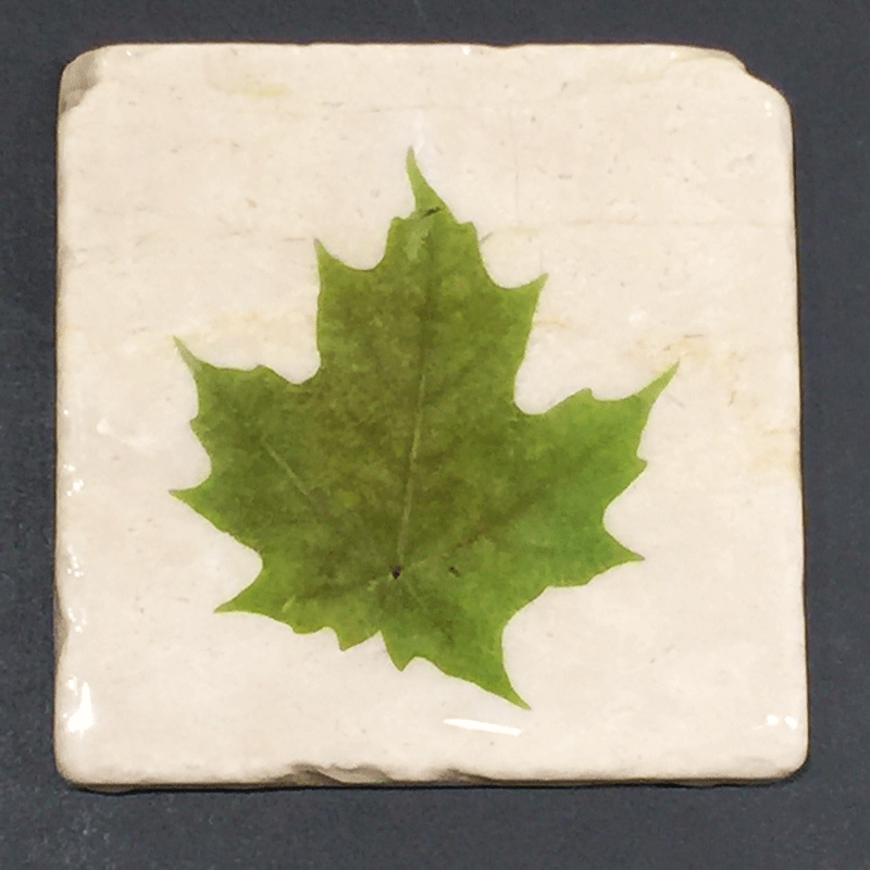 A square white piece of marble featuring a single green maple leaf.