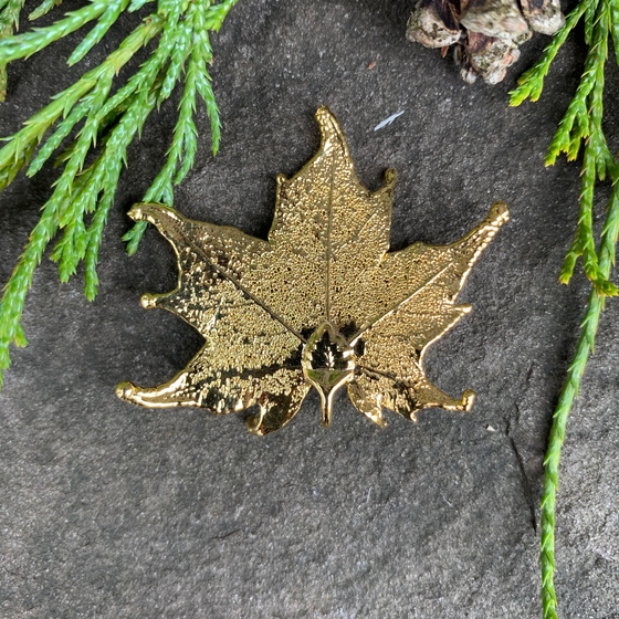 A small gold coated maple leaf sits on a stone background. The gold has a bright finish. At the top of the picture are decorative evergreen leaves and a pine cone.