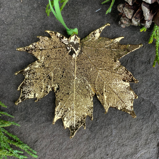 A large gold coated maple leaf sits on a stone background. A green ribbon is tied to the stem end of the leaf. The gold has a bright finish. Around the picture are decorative evergreen leaves and a pine cone.
