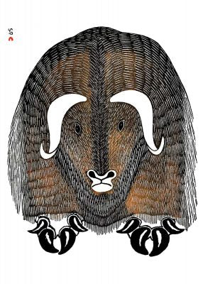 A large musk ox faces the viewer. It has two white curling horns, and a white muzzle. Its fur is black and brown and appears coarse. Its front hooves each end in four black, curling nails. This Canadian Indigenous print was painted by Kananginak Pootoogook, an Inuit artist born in the Ikerrasak camp in Nunavut. His signature is at the top left.