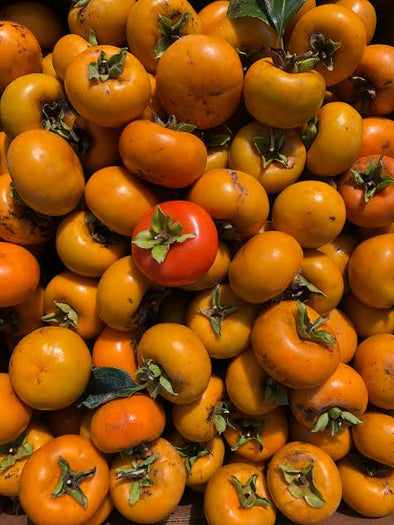 🍅 How to Tell When a Tropical Persimmon is perfectly RIPE🌳
