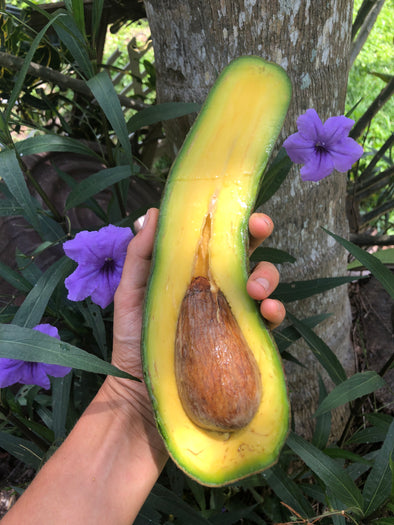 Longneck Avocados available THIS WEEK 💚 Don't miss out