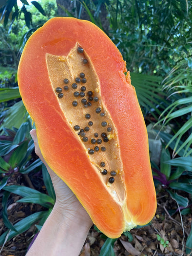 🧡Amazing local Caribbean papaya in season right now