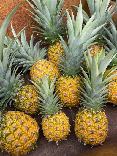 Fresh pineapples straight from our farm! 🍍