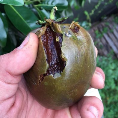 Black Sapote Recipe Ideas
