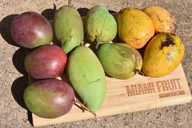 🌳Why we value local USA grown mangos. 💛  & why you should too!
