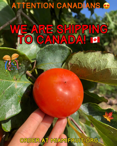 🍁MiamiFruit is shipping fruit to Canada!🎊