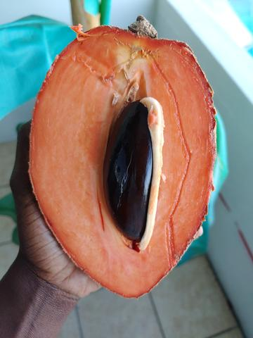 Easy and Unique Ways to Eat Mamey 🧡