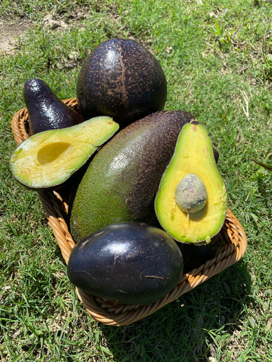 🖤 Beautiful Black Florida Avocados now available!