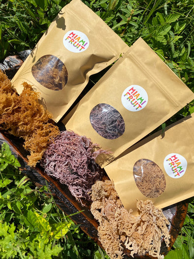 NEW✨ Sea Moss Variety Pack
