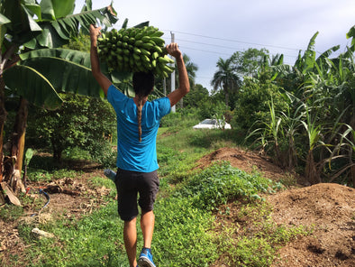 Miami Fruit Harvest of the Week
