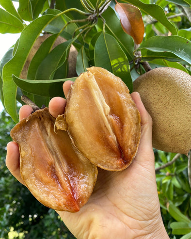 Sapodilla SALE $10 off no code needed! 💖