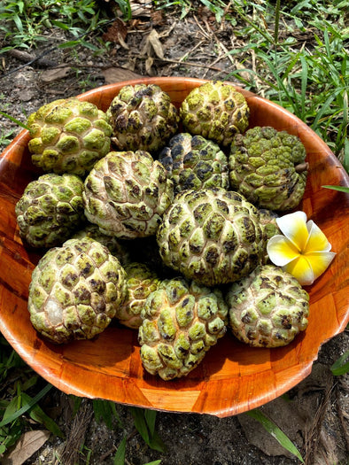 Sugar Apple Season is starting! 💚
