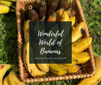 Wonderful World of Bananas 🍌