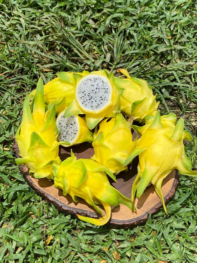 Sunrise Yellow Dragonfruit Sale 💛 $20 off!