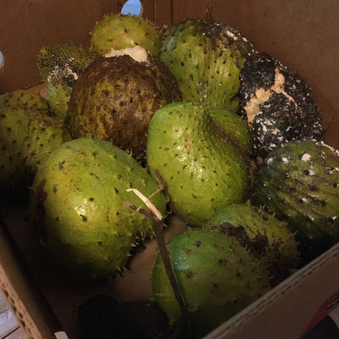 soursop guanabana ripe and ready to eat buy online at miamifruit