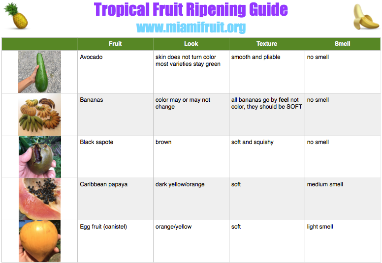 tropical fruit ripening guide miami fruit 1