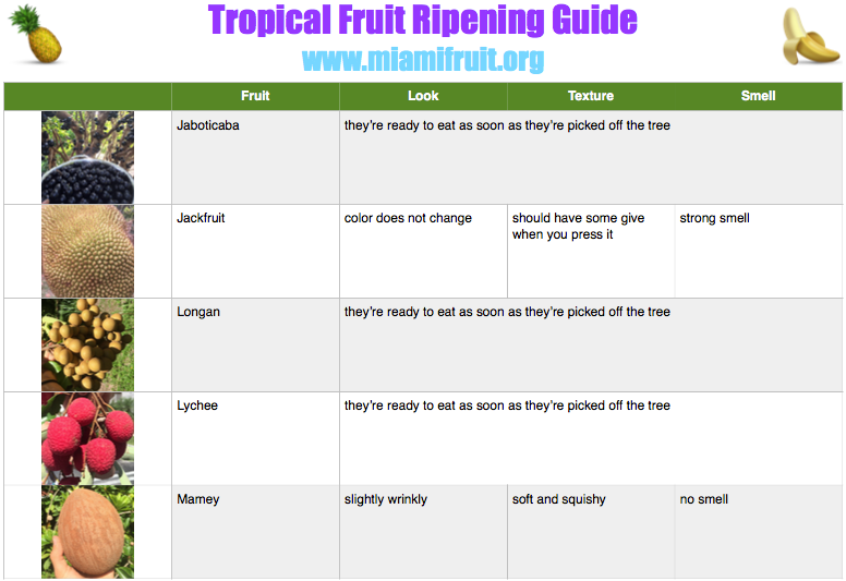 tropical fruit ripening guide miami fruit 2