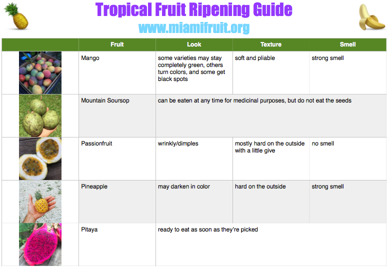 tropical fruit ripening guide miami fruit 3