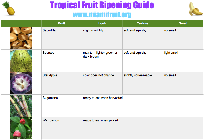 tropical fruit ripening guide miami fruit 4