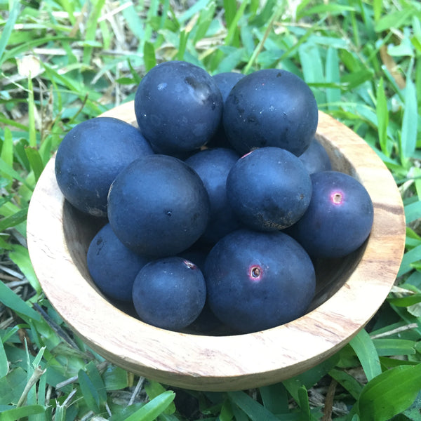 Blue Grape Box