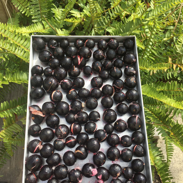Freeze Dried Jaboticaba