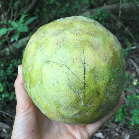 Green Custard Apple Box