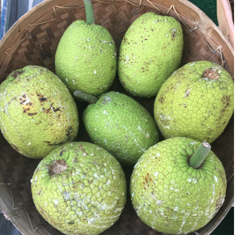Breadfruit (Ulu) Box