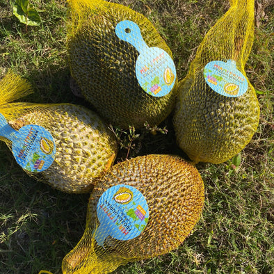Durian Party Box - Musang King, D24, D101, & D13