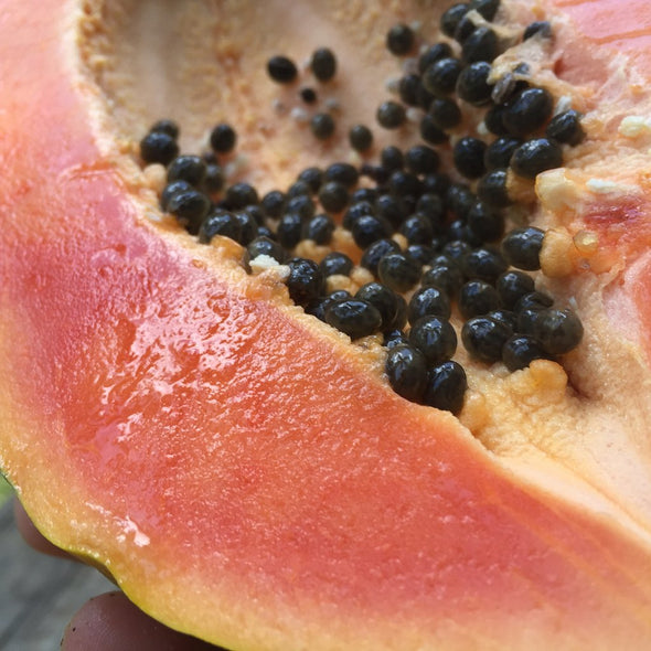 sweet juicy caribbean papaya non gmo