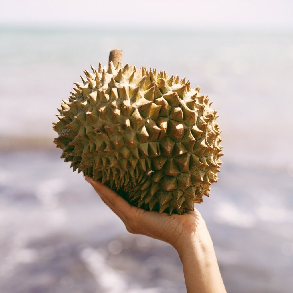 Fresh Durian Buy Fresh Durian Online From Miami Fruit