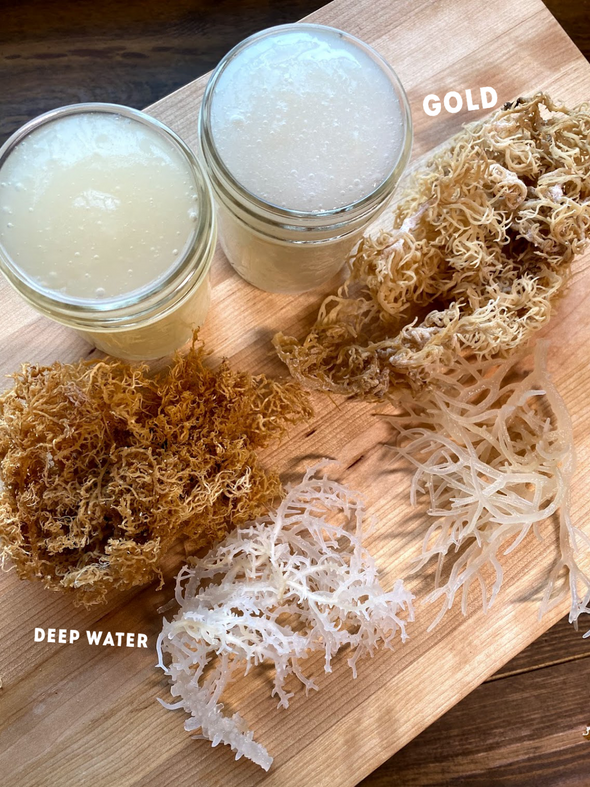 Wild Harvested Deep Water Sea Moss