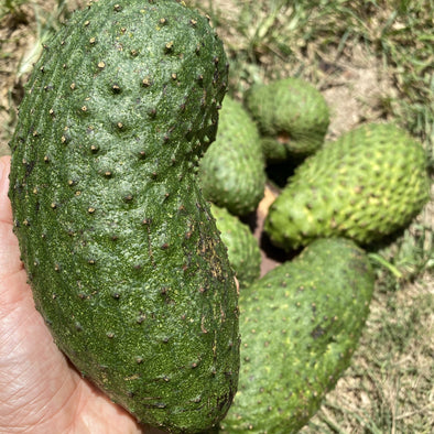Soursop (Guanabana) for Juice