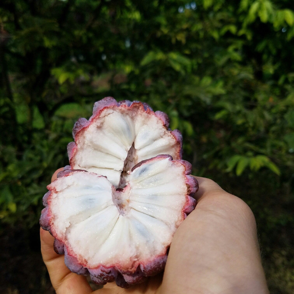 Purple Sugar Apple
